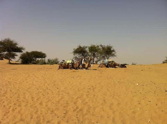 Camelos no Deserto de Thar