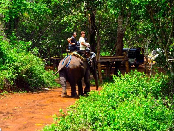 Elefantes em Chiang Mai, Tailândia