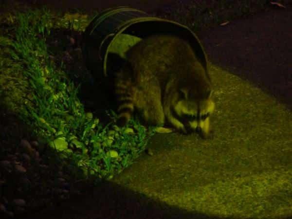 Animais-noturnos-em-Cingapura-3