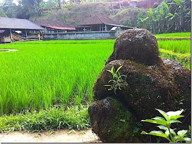 Campos-de-arroz-em-Ubud