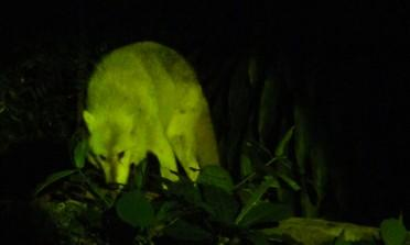 Night Safari: o zoológico noturno de Cingapura
