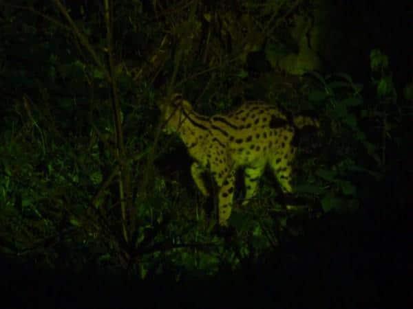 Zologico-Noturno-de-Cingapura-1