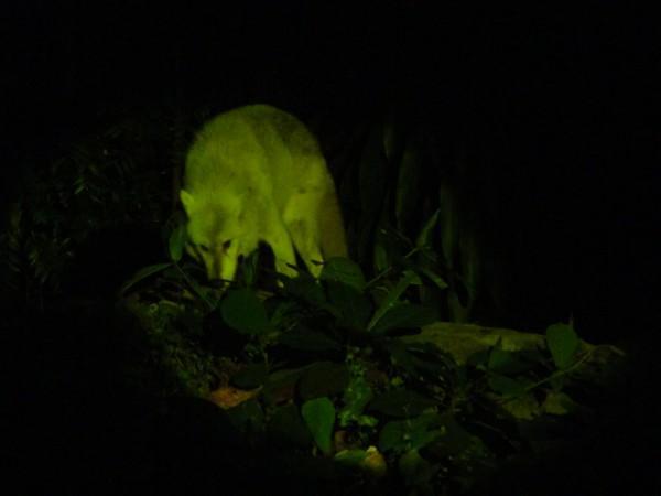 Zoológico-Noturno-de-Cingapura-2