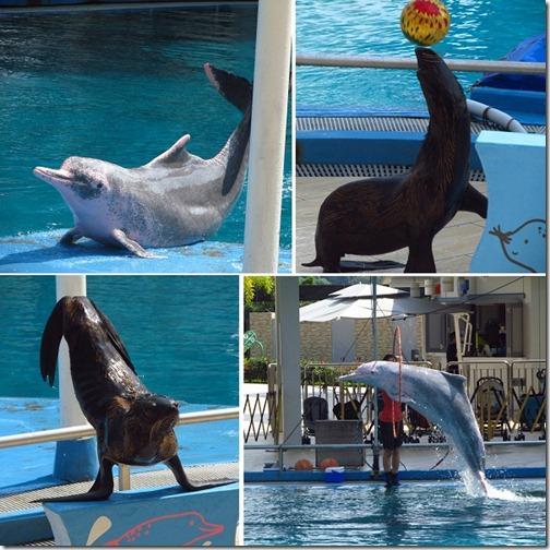 focas e golfinhos_Cingapura