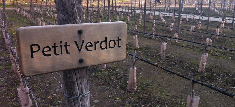 Concha Y Toro: visita à famosa vinícola de Santiago