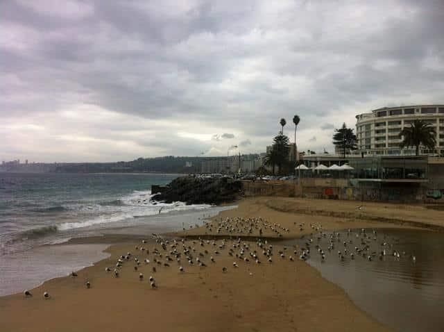 Vina del Mar, aves na praia