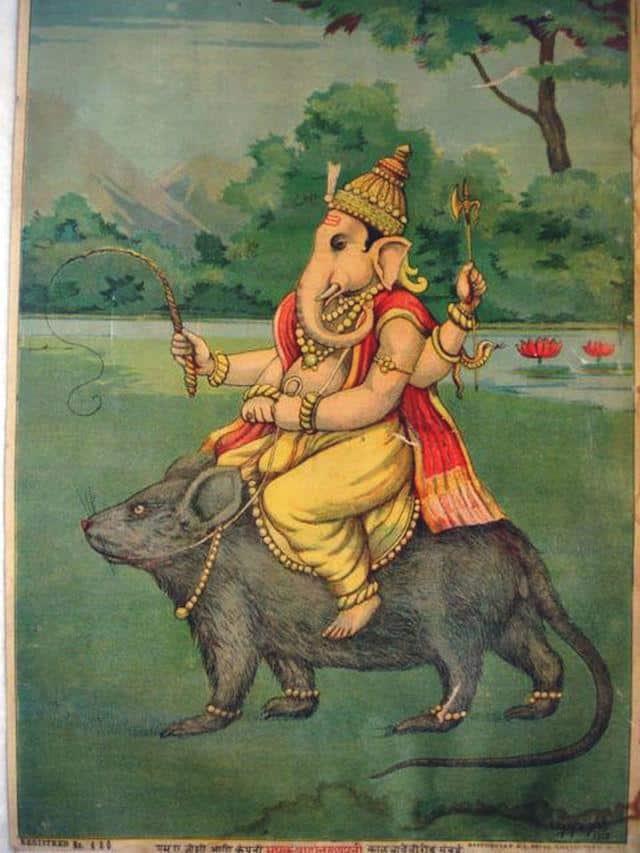 Rato na Índia Ganesha