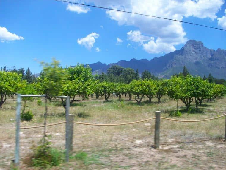 Viícola em Cape Town