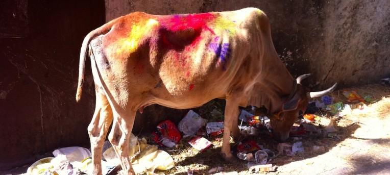 Holi, o festival indiano das cores