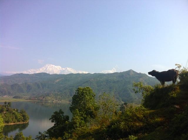 Bufala em Pokhara Nepal