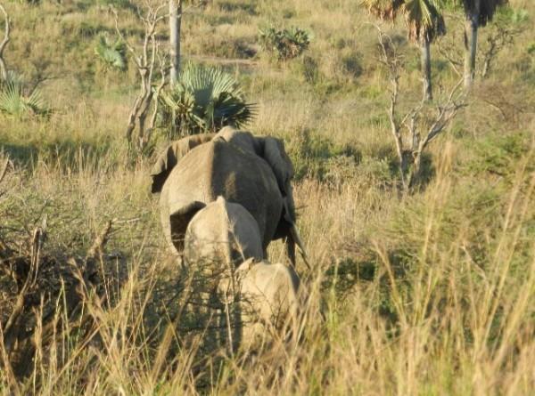 Uganda, África
