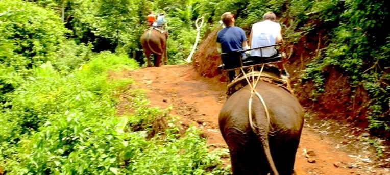 A verdade sobre os passeios de elefante na Tailândia