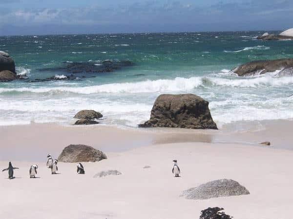 Boulders Beach: praia dos pinguins em Cape Town