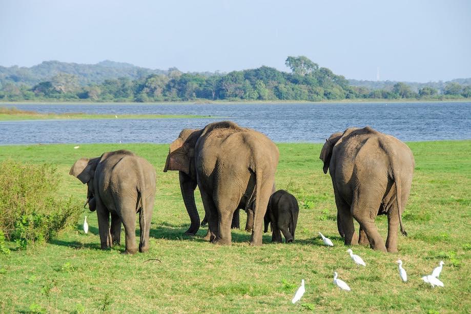 Passeios éticos com elefantes na Tailândia