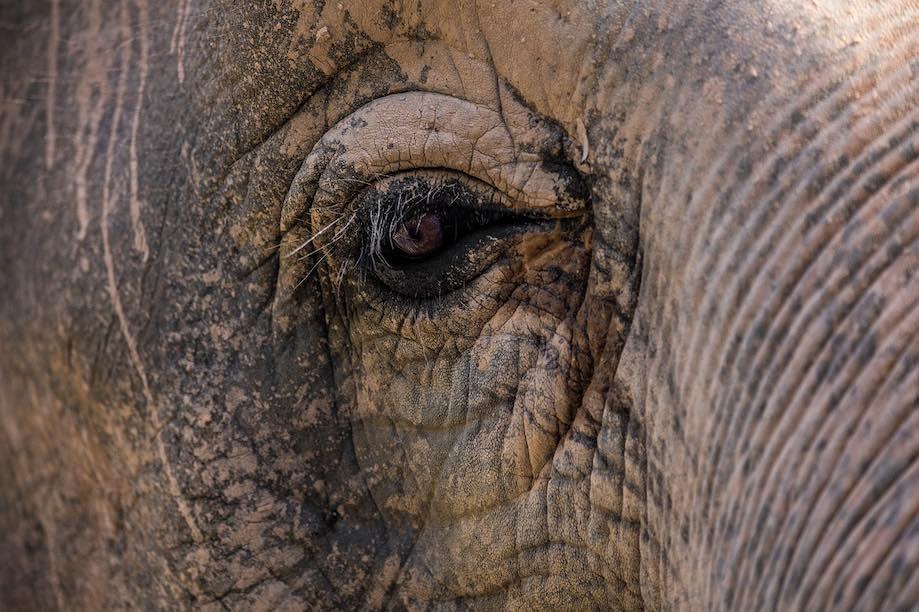 Passeios com elefantes na Tailândia