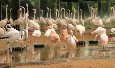 O Parque das Aves, em Foz do Iguaçu