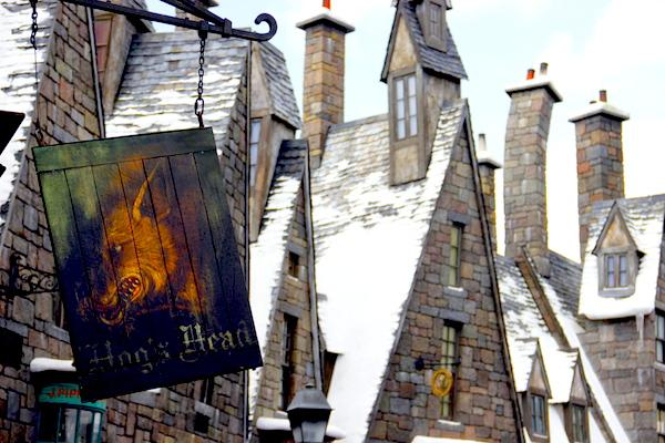 Cabeça de Javali - Parque do Harry Potter