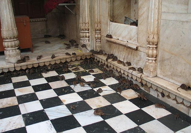 Karni_Mata_Temple