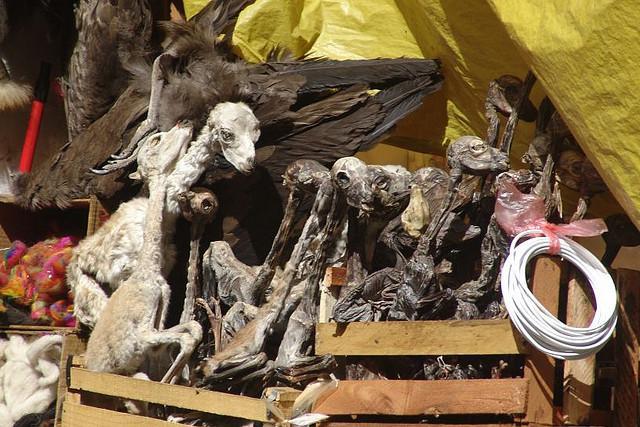 mercado das bruxas bolívia