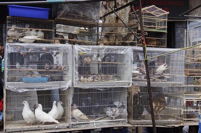 Animais na Feira de TRistan Narvaja