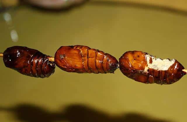 Fried-silkworm-china