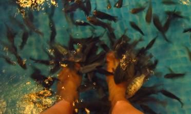 Como virar comida de peixe