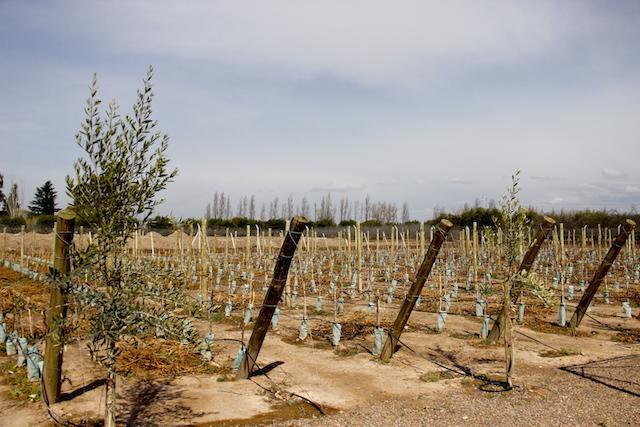 Vinicola Domiciano - Mendoza Argentina