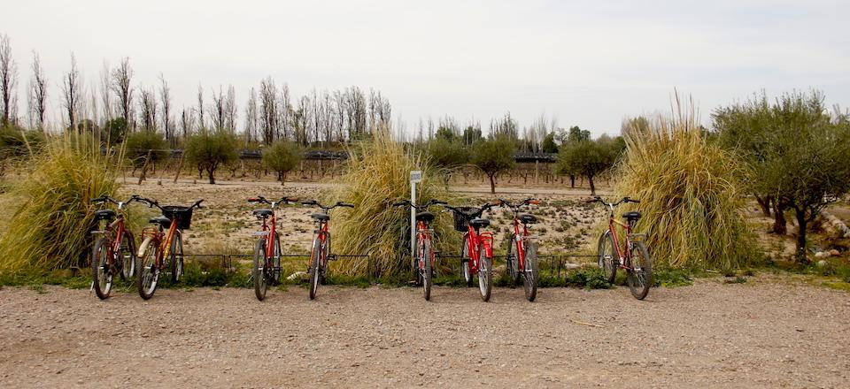 Conheça as vinícolas de Mendoza de bicicleta