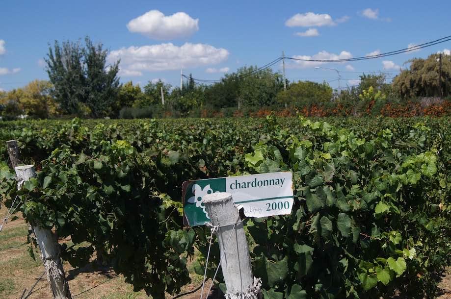 Vinícolas em Mendoza, Argentina