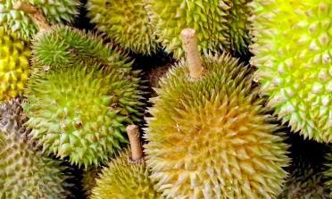Durian: a fruta mais fedorenta do mundo vem da Ásia