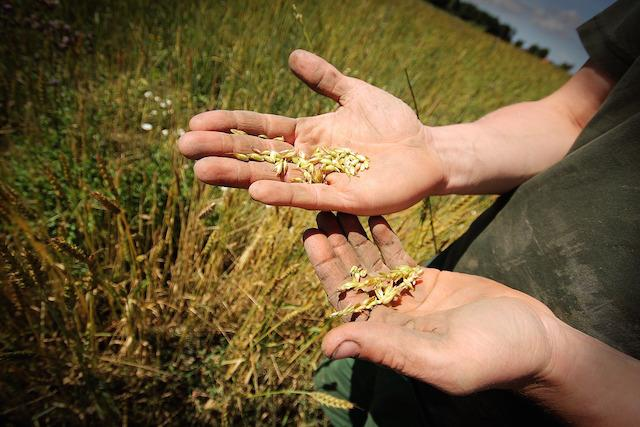 WWORF - Fazendas Organicas