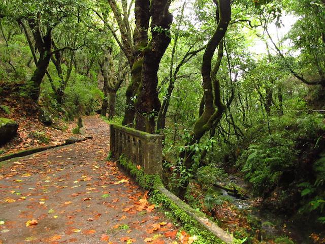Levadas da Madeira