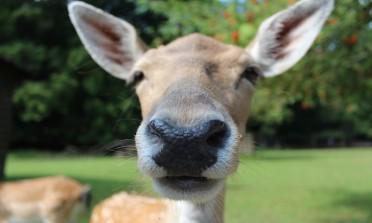 Atrações com animais: como decidir o que é ético?
