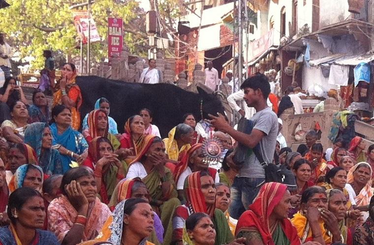 a vaca é sagrada na Índia?