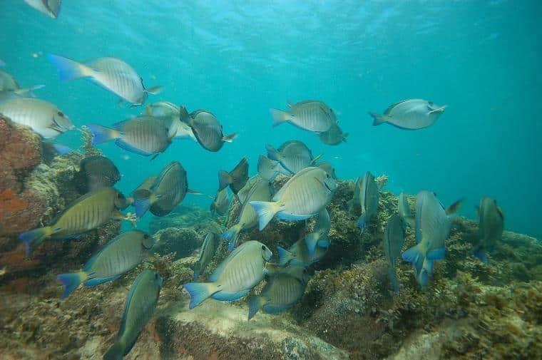 peixes vistos em snorkeling em praia
