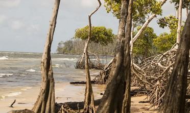 Um país chamado Pará