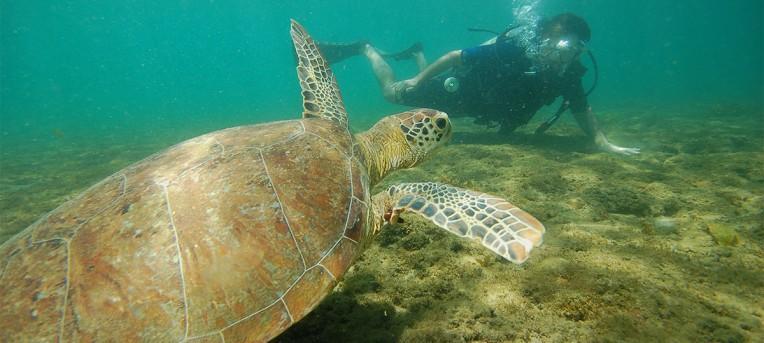 Mergulho em Fernando de Noronha: paraíso debaixo d'agua