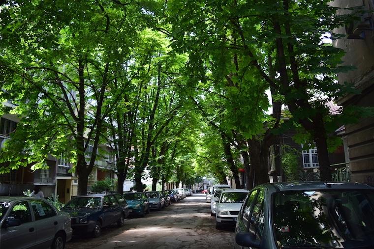rua árvores ruse bulgária