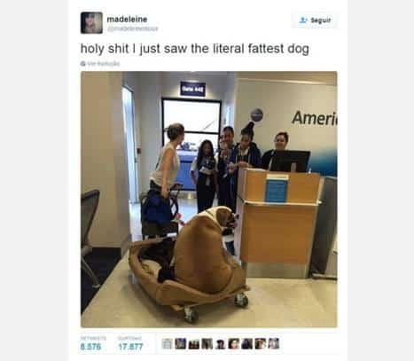 cão viajar