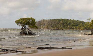 O que fazer na Ilha do Marajó, no Pará