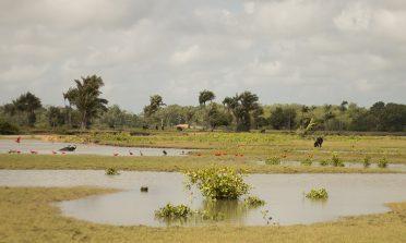 Passeio na Fazenda Bom Jesus, na Ilha do Marajó