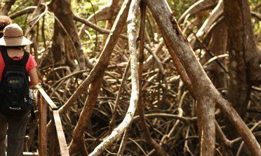 Passeio pela Fazenda São Jerônimo, na Ilha do Marajó