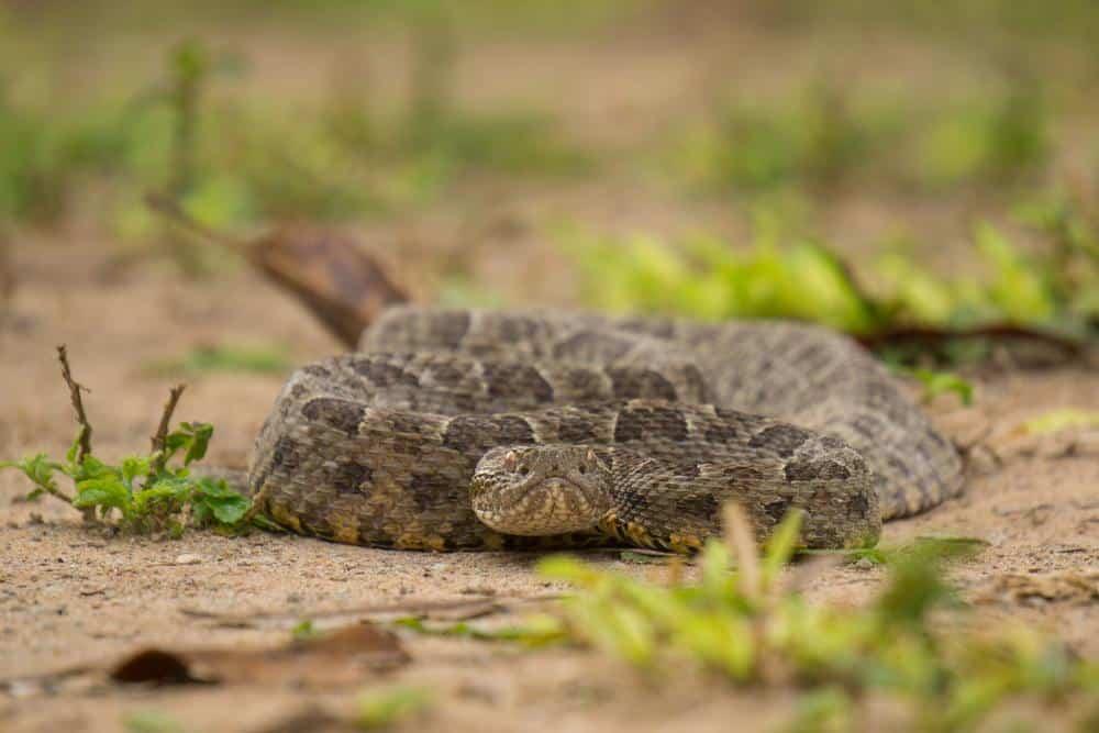 Ilha da queimada grande (ilha das cobras)