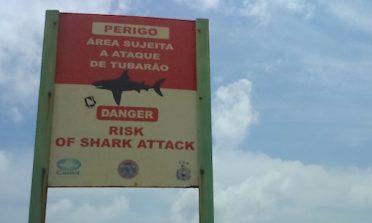Tubarões em Recife e o desequilíbrio ambiental