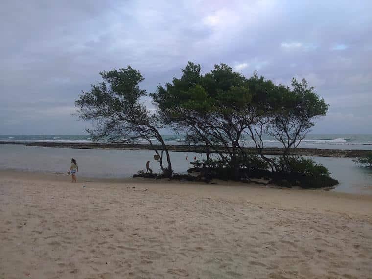 praias de pernambuco brasil enseada dos corais