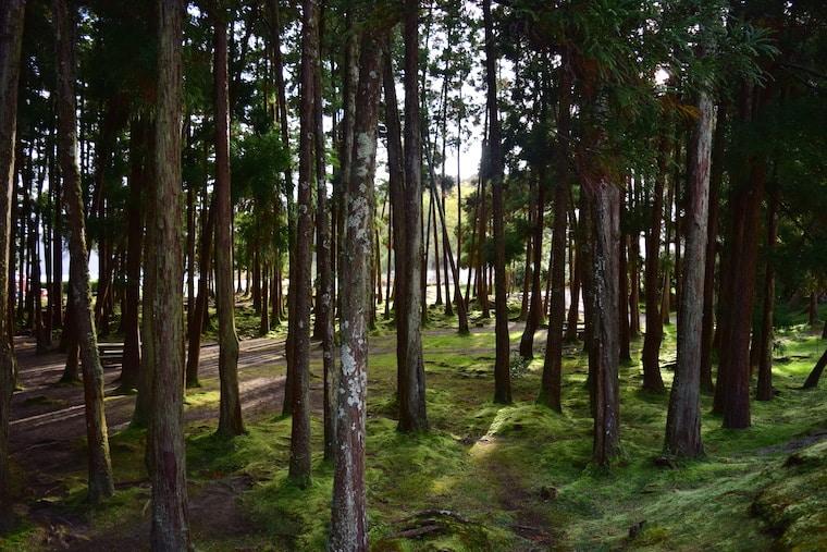 lagoa de furnas açores bosque