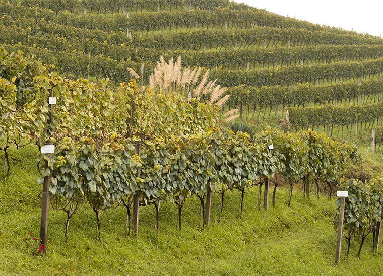 vale-vinhedos-vinhos
