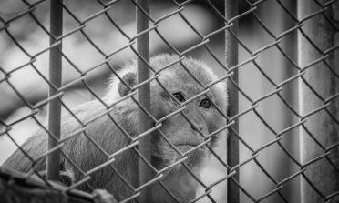 Pelo fim dos zoológicos