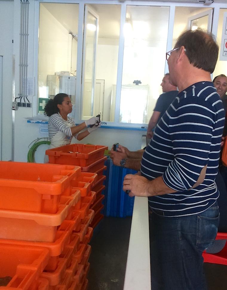 leilão do peixe alentejo portugal 2