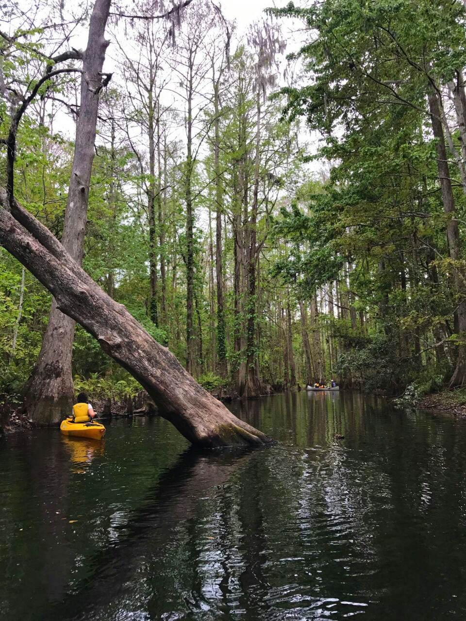 Kayaking perto da Disney, Orlando